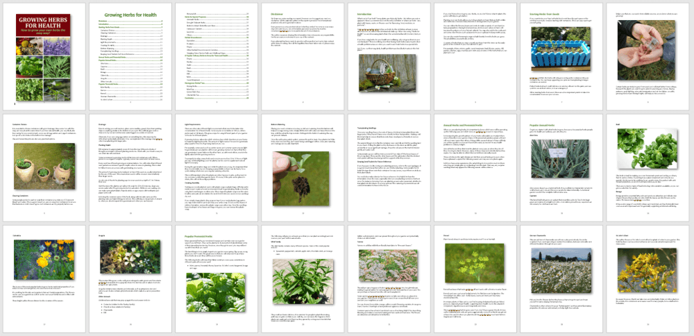 Growing Herbs for Health eBook PLR